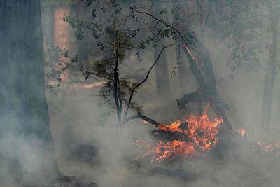 Bomberos logran contener más del 50 % del mayor incendio activo en EE.UU.