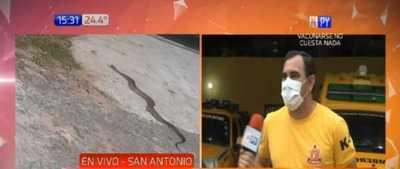 San Antonio: Una serpiente mordió a una menor