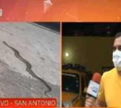 Menor es mordida por una serpiente en San Antonio