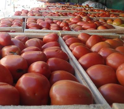 Productores frutihortícolas afectados por falta de ventas de tomates y bajos precios en el mercado