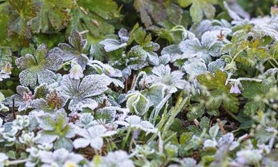 Heladas: Recomiendan cubrir plantas verduras y hortalizas con papel o plásticos