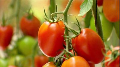 Cae venta de tomates y productores exigen respuesta del Gobierno