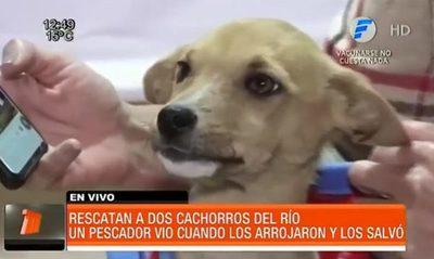 Pescador rescató a dos cachorros del río Tebicuary