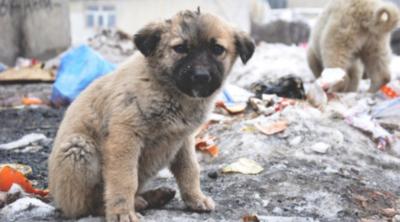 Muchos perros callejeros mueren sin conocer el calor de un hogar