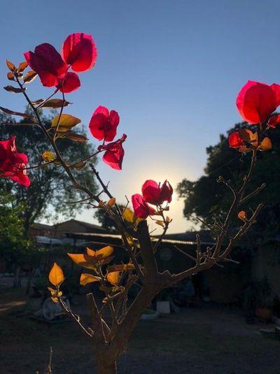 Asunción se vestirá de flores y follaje al cumplir 484 años de fundación