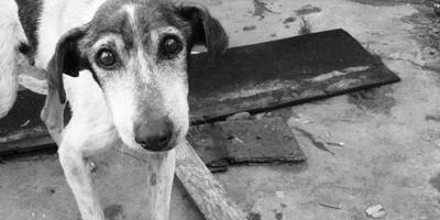 Día del Perro Callejero: fecha para impulsar la adopción de estos animales