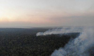 Incendio de gran magnitud afectó a parte de la Reserva San Rafael