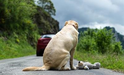 Viral: La desgarradora reacción de un perro al ser abandonado por su dueño (Video)