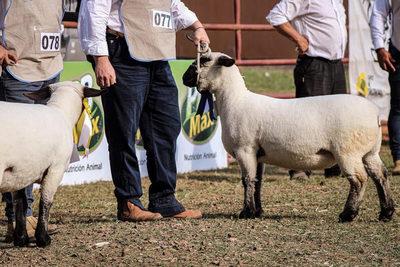 """Expo demostró que """"la producción de ovinos aumentó y mejoró significativamente"""""""