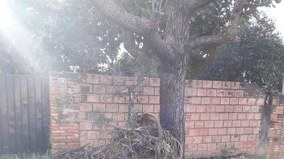 Árbol se secó por culpa de la quema de basura