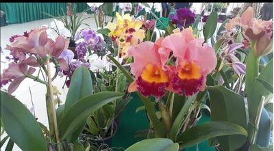 Hasta este viernes estará habilitada la Expo Feria de Orquídeas en San Lorenzo