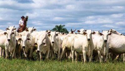 Precio del ganado paraguayo pega un salto y se acerca al récord logrado en 2011