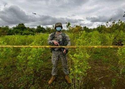 Cocaína al alza: ONUDD presenta su informe para 2021