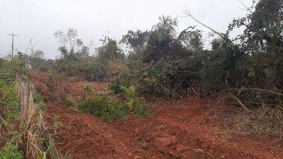 San Pedro: Galopante deforestación para expansión del cultivo de soja