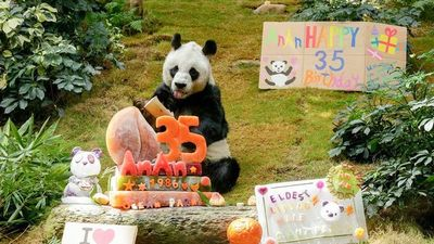 An An cumple 35 años y es el panda gigante más viejo del mundo