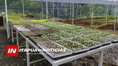 EN INVERNADERO PRODUCEN PLANTINES PARA HUERTAS, ASÍ COMO PLANTINES DE SANDIA HIBRIDA.