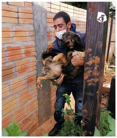 """Defensa Animal rescató a cuatro perros que quedaron """"huérfanos"""" a causa del covid"""