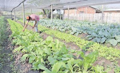 FAO dice que la pandemia no afectó considerablemente al sistema alimentario del Paraguay