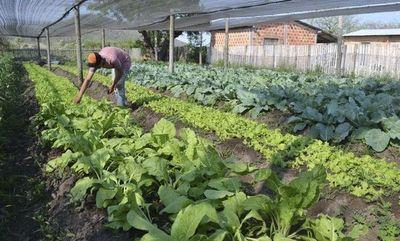 Pandemia no afectó considerablemente sistema alimentario del Paraguay, según FAO