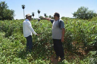 Yacyretá triplicó la inversión destinada a productores agrícolas de Misiones