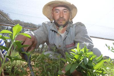 Agricultura familiar campesina se fortalece en Misiones con G. 13.500 millones invertidos por la EBY