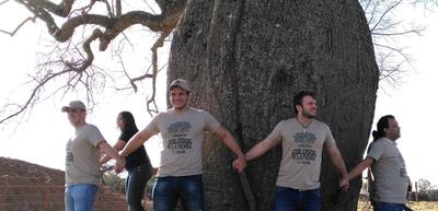 """""""Colosos de la Tierra"""": Inicia cuenta regresiva para conocer al árbol más grande del Chaco"""