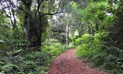 Había una vez un bosque, la historia del Bosque Atlántico en Paraguay