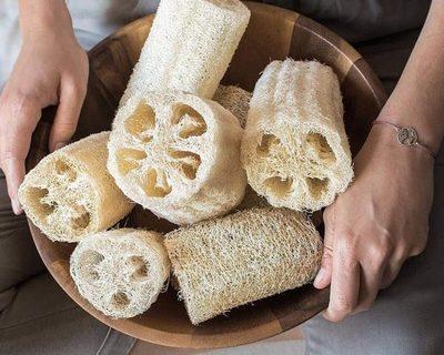 Estudian propiedades de esponja vegetal para obtener materiales amigables con el ambiente