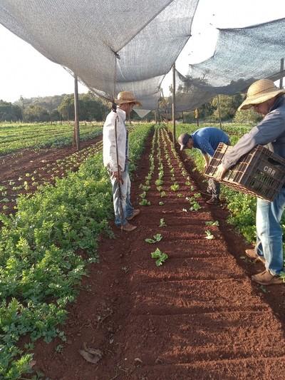MAG se desentiende de proyecto de agricultura familiar para 45 productores