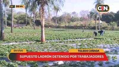 Supuesto ladrón de frutillas detenido por trabajadores