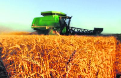 No habrá oferta exportable de trigo por las pérdidas de producción