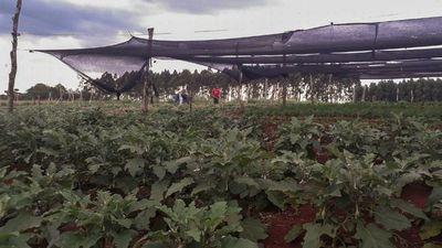 El MAG solo entregó 50% de apoyo a proyecto en zona de Minga Guazú
