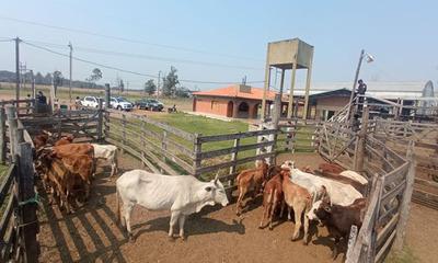 Policía de Coronel Oviedo recupera 20 animales vacunos hurtados en Departamento de Guairá