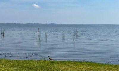 Mejoró calidad del agua del Lago Ypacaraí