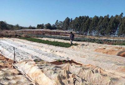 MAG promete pozos artesianos a pequeños productores de Minga Guazú