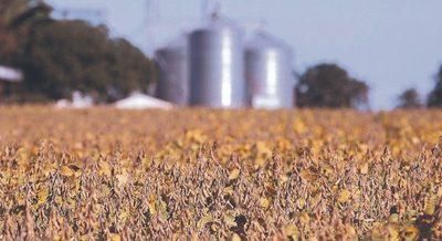Plantas aceiteras procesaron 15,5% menos de granos hasta julio