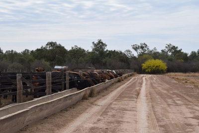 Brasil: prevén alza de animales confinados en Mato Grosso para 2021
