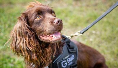 Australia: mataron a perros rescatados para evitar la propagación del coronavirus