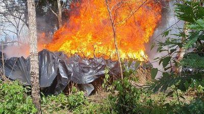 Senad genera pérdidas por US$ 13 millones al narcotráfico en una semana de operativos en Amambay