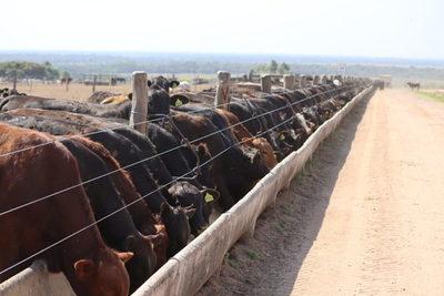 Se cierren negocios de ganado gordo para exportación en US$ 4 a la carne