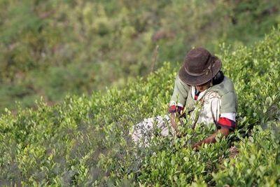 Bolivia promete controlar cultivos de hojas de coca tras aumento en 2020