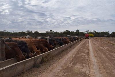 Paraguay avanza con el objetivo de acceder a la Cuota 481 de la Unión Europea