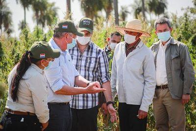 Mandatario resalta rentabilidad del cáñamo como rubro que puede revolucionar agricultura familiar campesina