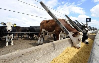 Uruguay es el origen de 47% de las importaciones Cuota 481 desde terceros países