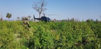 Anulan 673 toneladas de Marihuana tras 10 días de operaciones antidrogas