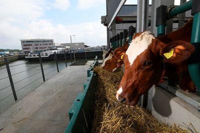 Una granja flotante: el futuro de la ganadería