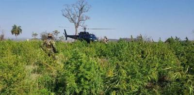 Paraguay y Brasil anulan 218 hectáreas de cultivos de marihuana tras 10 días de operaciones – Prensa 5