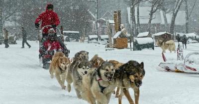 La Nación / Trineos de perros atraen de nuevo el turismo en la austral Ushuaia