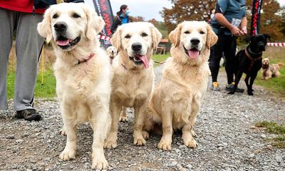 ¿Los perros pueden descubrir si las acciones humanas son intencionadas o no?