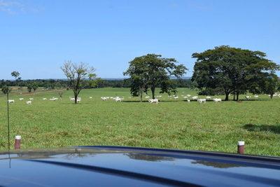 APPEC y Frigorífico Concepción acuerdan precio base de venta de ganado gordo durante seis meses